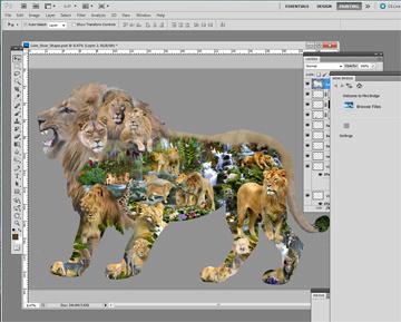 lion_progress